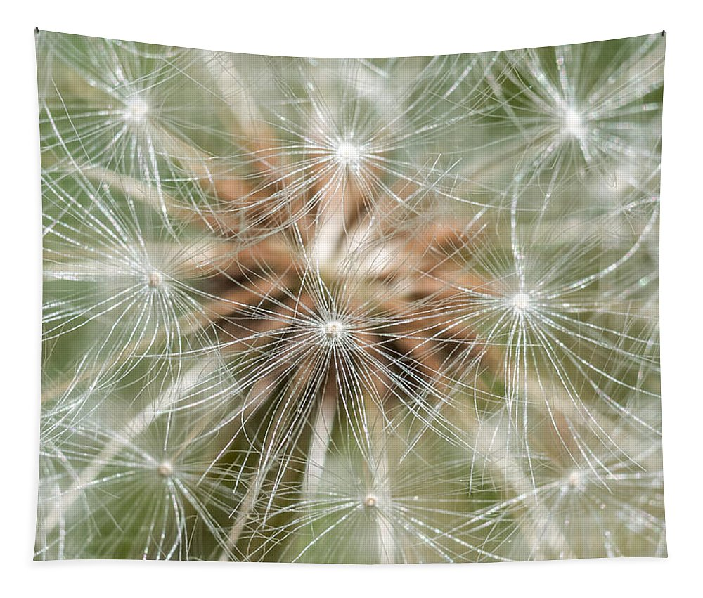 Terry Deluco Tapestry featuring the photograph Dandelion Sparkles by Terry DeLuco