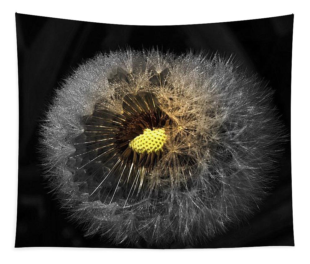 Dandelion Tapestry featuring the photograph Dandelion Spotlight by Sherman Perry