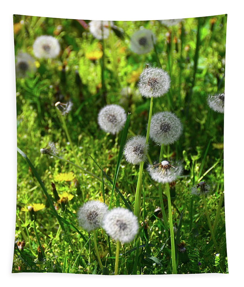 Dandelions On The Maryland Appalachian Trail Tapestry featuring the photograph Dandelions On The Maryland Appalachian Trail by Raymond Salani III