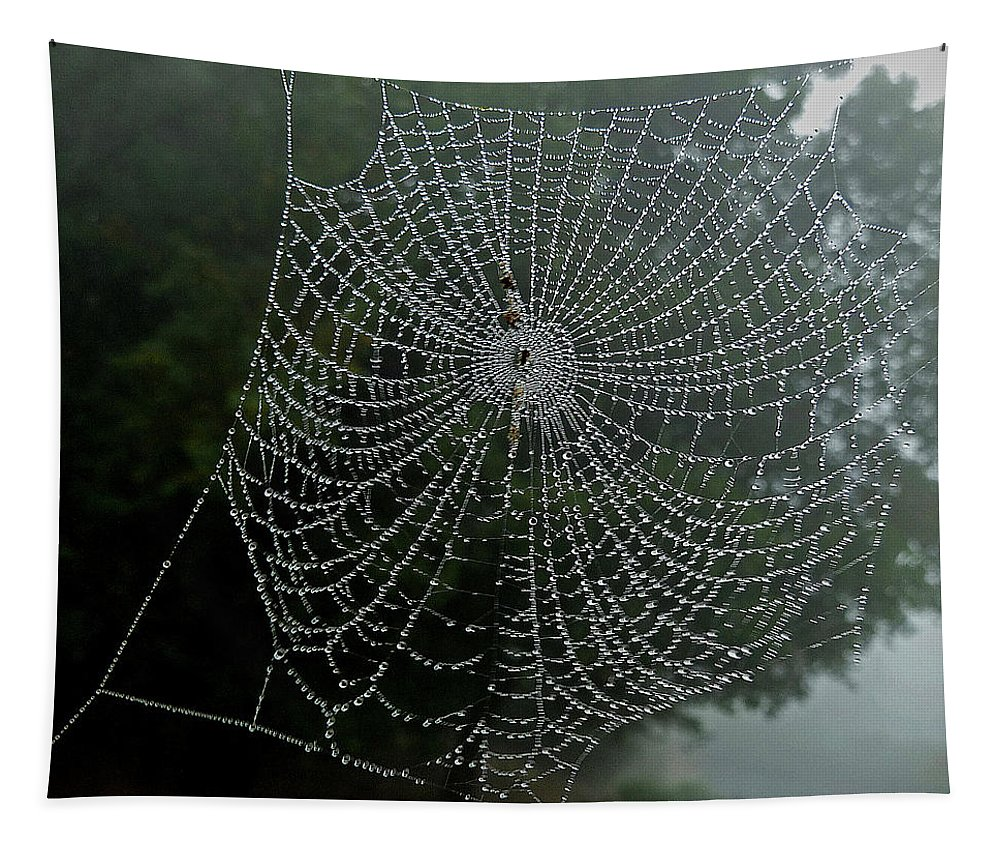 Spiderweb Tapestry featuring the photograph Db6325-dc Spiderweb On Sonoma Mountain by Ed Cooper Photography