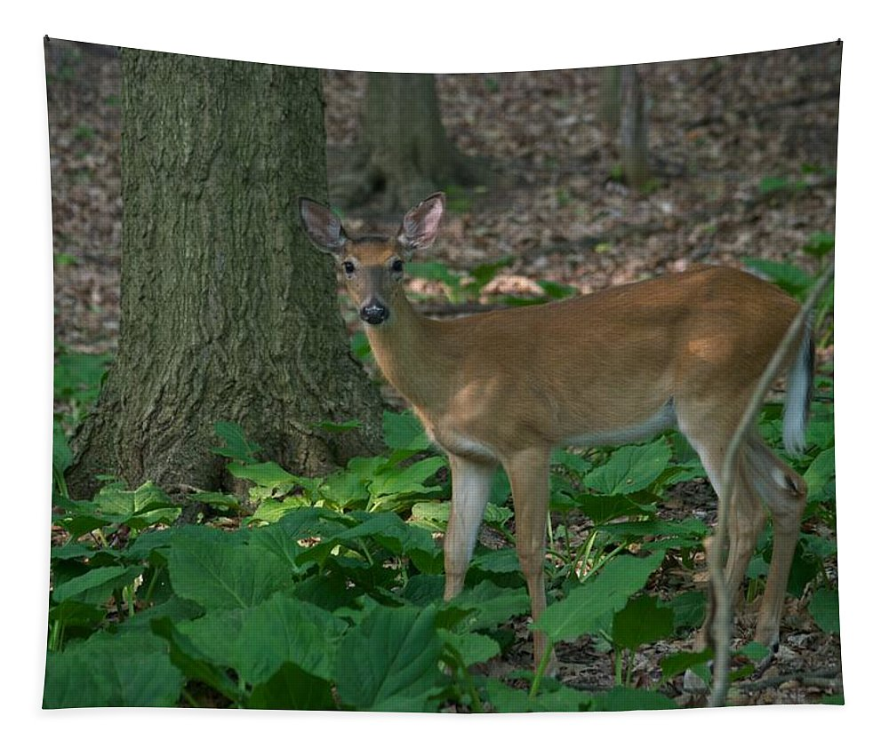 Animal Tapestry featuring the photograph Deer 7414 by Michael Peychich