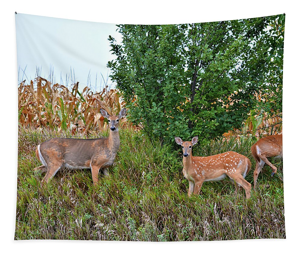Deer Tapestry featuring the photograph Deer Family by Bonfire Photography