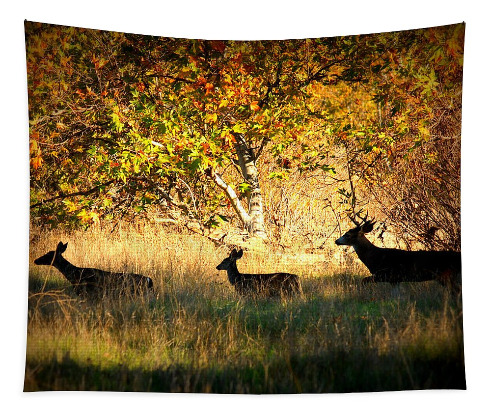Landscape Tapestry featuring the photograph Deer Family In Sycamore Park by Carol Groenen