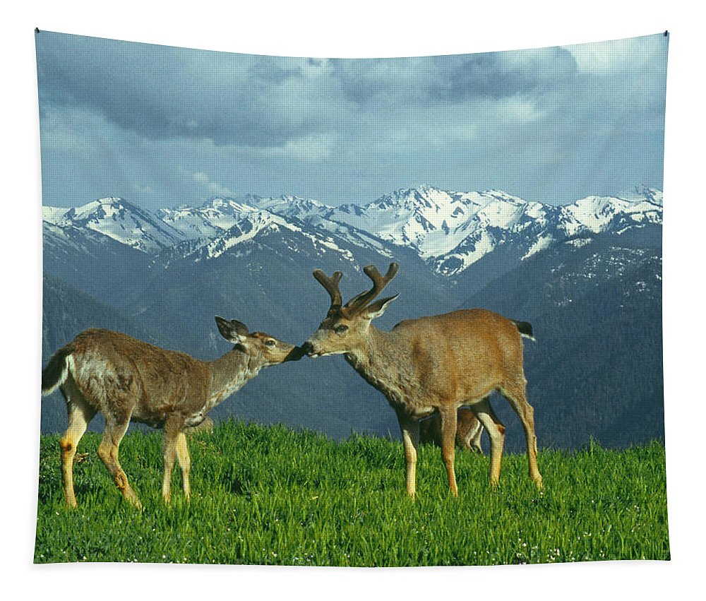 Black Tailed Deer Tapestry featuring the photograph Ma-181-deer In Love by Ed Cooper Photography