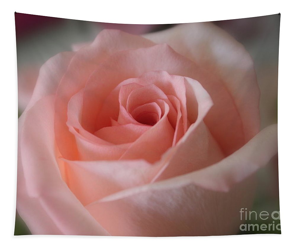The Power Of Pink Tapestry featuring the photograph Delicate Pink Rose by Carol Groenen