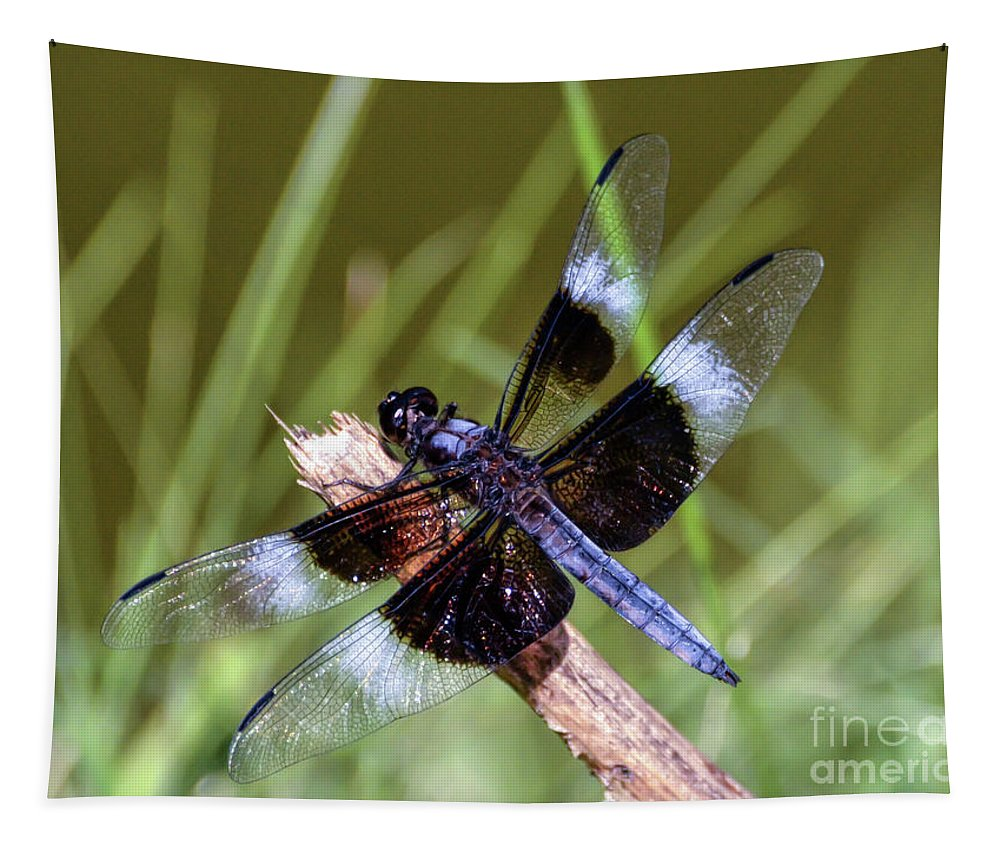 Dragonfly Tapestry featuring the photograph Delicate Wings Of A Dragonfly by Kerri Farley