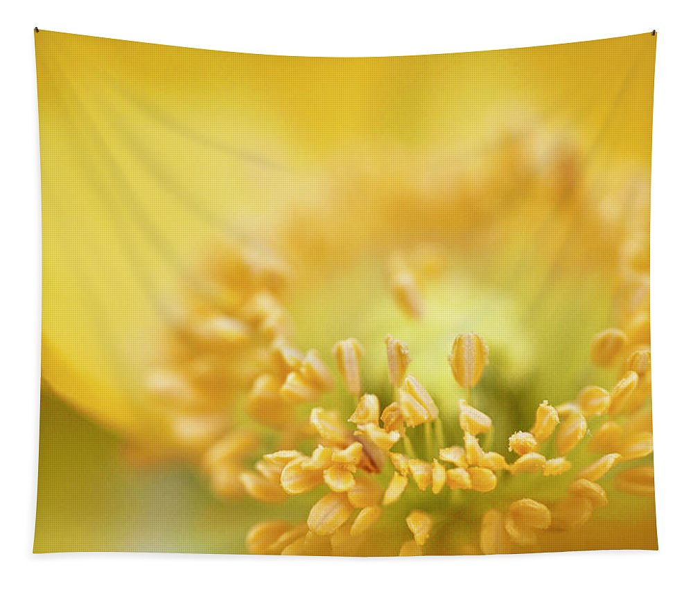 Flowers & Plants Tapestry featuring the photograph Delicate Yellow Poppy by Jeff Folger