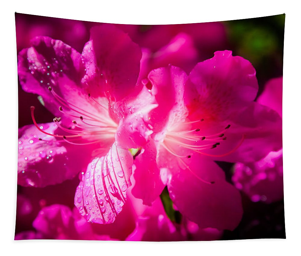 Pink Azaleas Tapestry featuring the photograph Delight In Creation by Karen Wiles