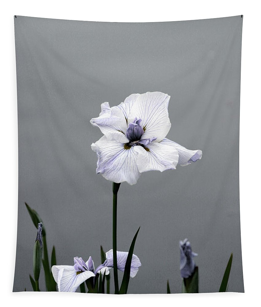 Japanese Water Iris Tapestry featuring the photograph Desaturated Japanese Water Iris 2707 H_5 by Steven Ward