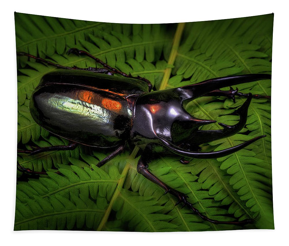 Bugs Tapestry featuring the photograph Devil Horned Rhino Beetle by Robert Storost