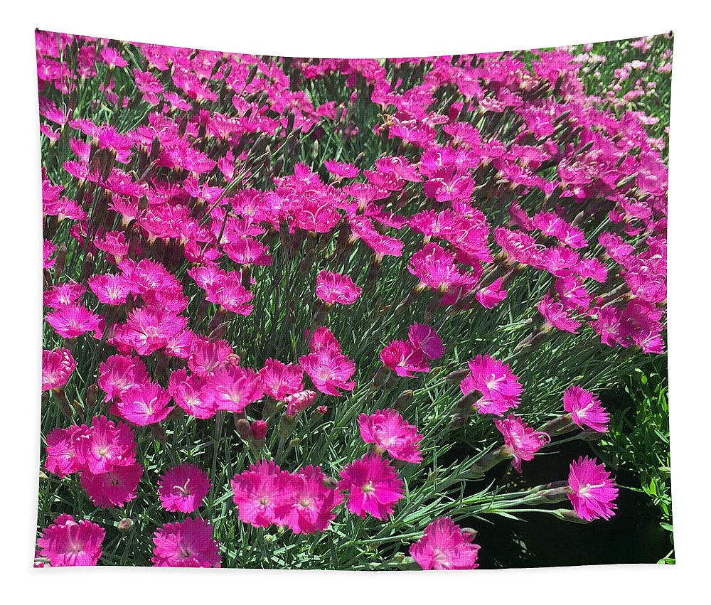 Dianthus Tapestry featuring the photograph Dianthus by James Pinkerton