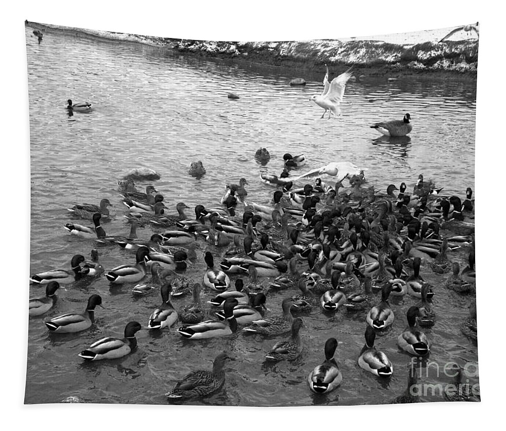 Ducks Tapestry featuring the photograph Dinner Is Served - Black And White by Carol Groenen
