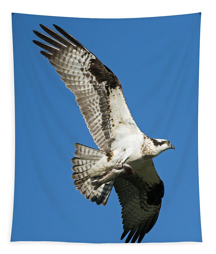 Osprey Tapestry featuring the photograph Dinner To Go by Mike Dawson