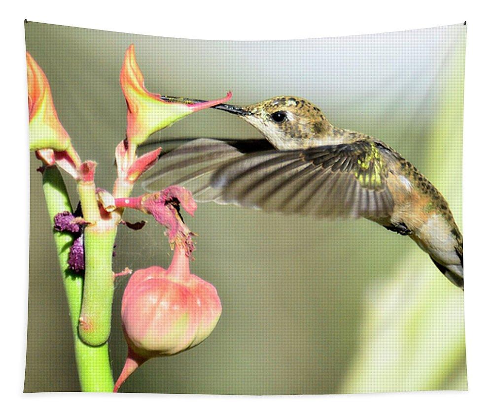 Hummingbird Tapestry featuring the photograph Dive In by Saija Lehtonen