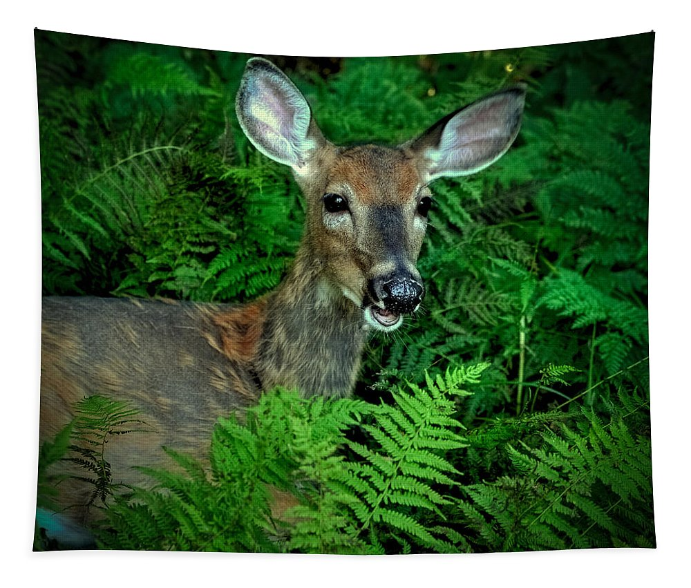 Doe In The Woods Tapestry featuring the photograph Doe In The Woods by David Patterson