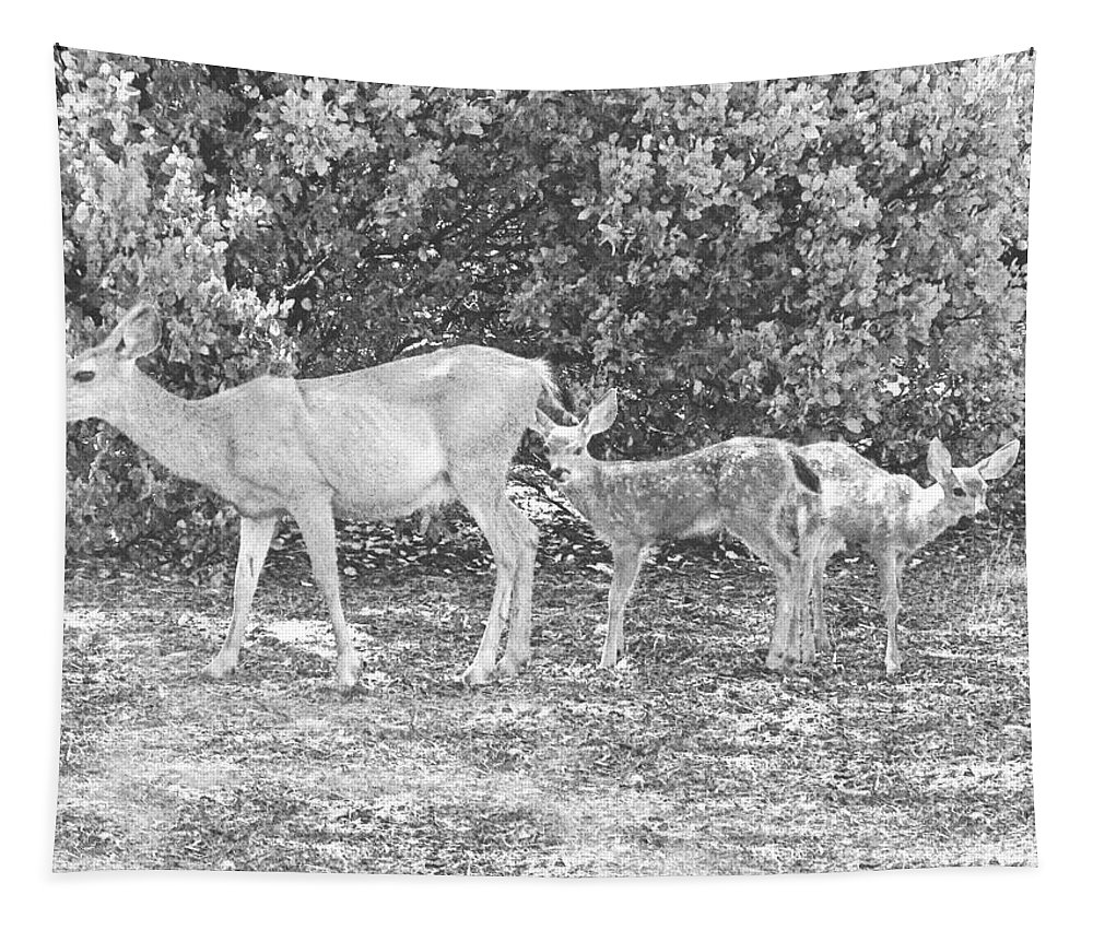 Deer Tapestry featuring the photograph Doe With Twins Pencil Rendering by Frank Wilson