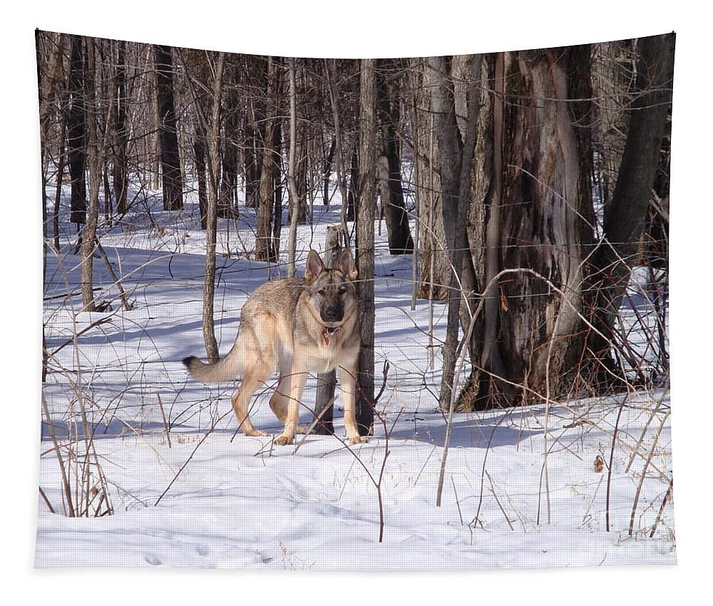 Dog Tapestry featuring the photograph Dog Breed German Shepherd by Lyssjart Sj