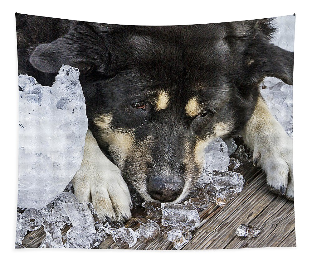 Cold Tapestry featuring the photograph Dog Days Of Summer by Bob Slitzan