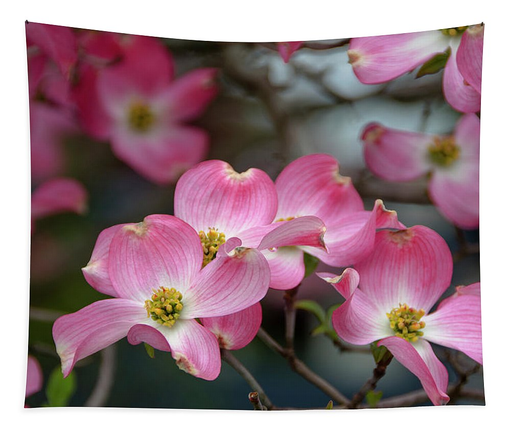 Dogwood Tapestry featuring the photograph Dogwood Blossoms by Eleanor Bortnick