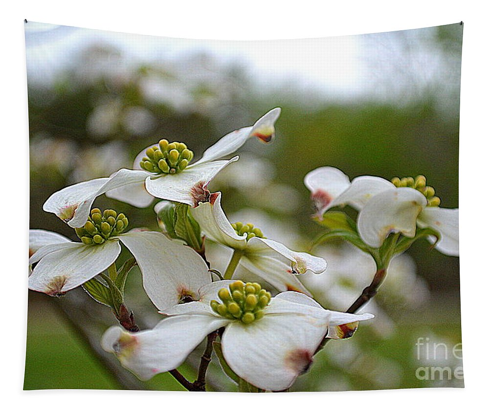 Dogwood Tapestry featuring the photograph Dogwood Blossoms by Karin Everhart