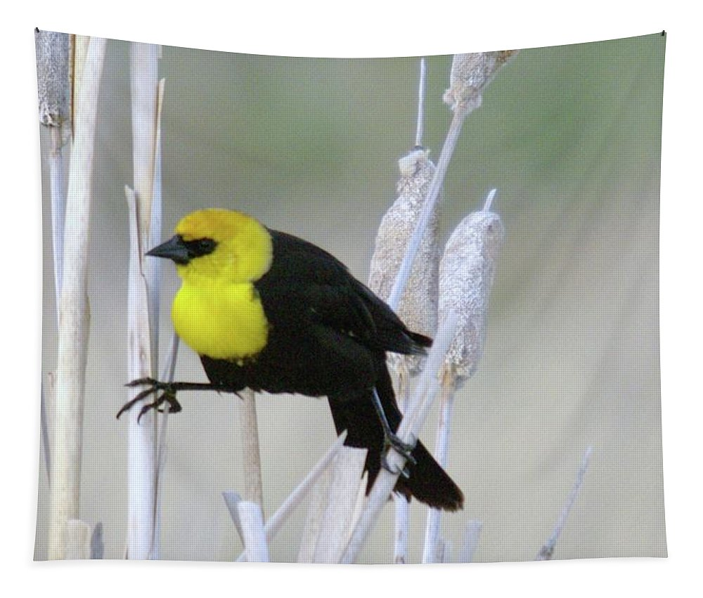 Birds Tapestry featuring the photograph Doing The Splits by Jeff Swan