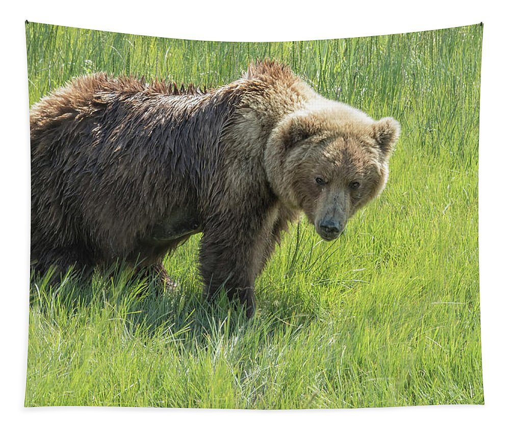 Brown Bear Tapestry featuring the photograph Don't Mess With Mama Bear by Belinda Greb