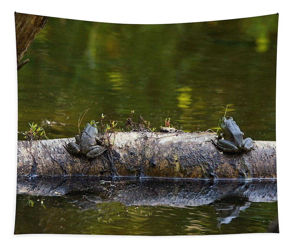 Frogs Tapestry featuring the photograph Don't You Love Mornings Like This by Susan Capuano
