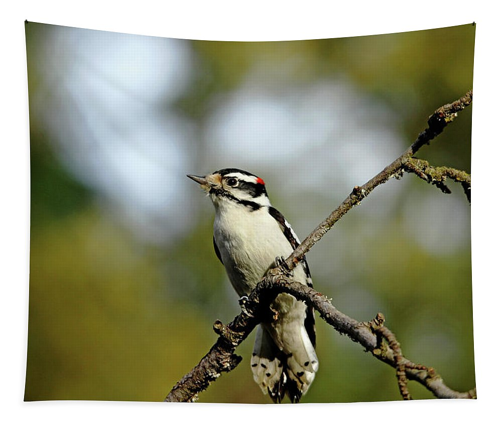 Woodpecker Tapestry featuring the photograph Downy Woodpecker In Fall by Debbie Oppermann