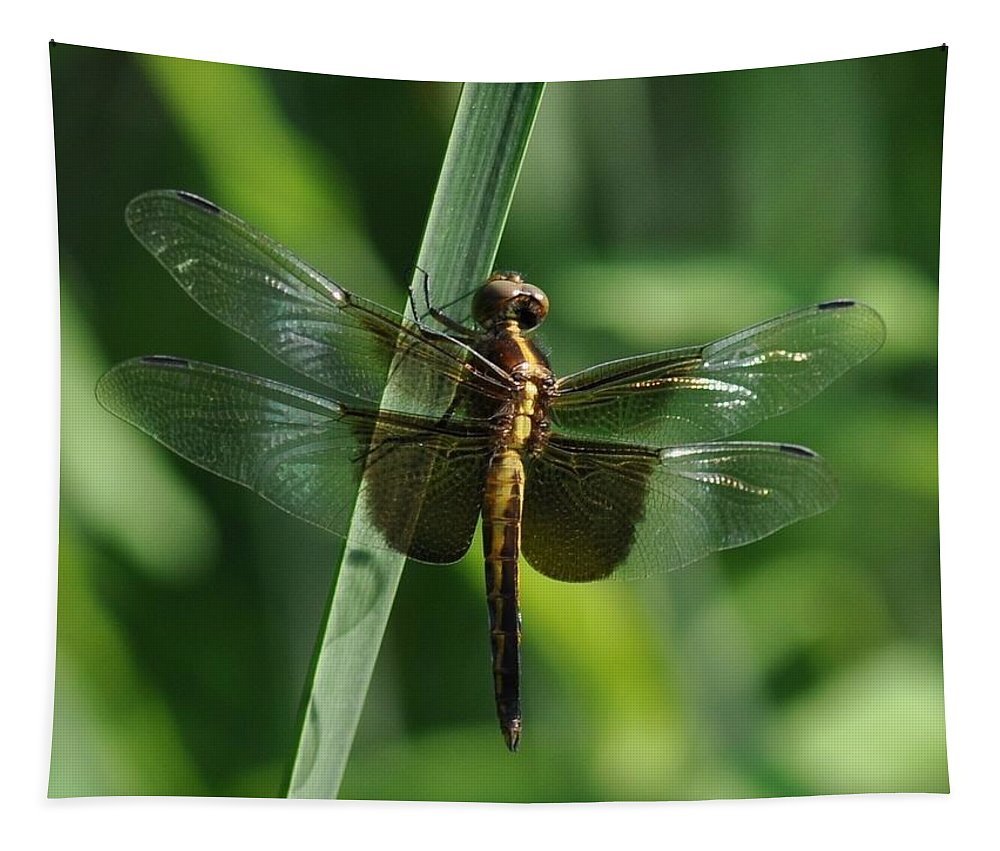 Damselfly Tapestry featuring the photograph Dragonfly At Rest by Barbara Treaster