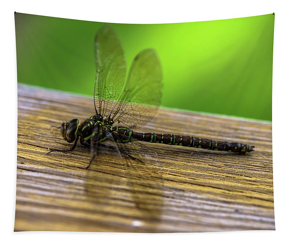 Dragonfly Wings Tapestry featuring the photograph Dragonfly Colors by Sherman Perry