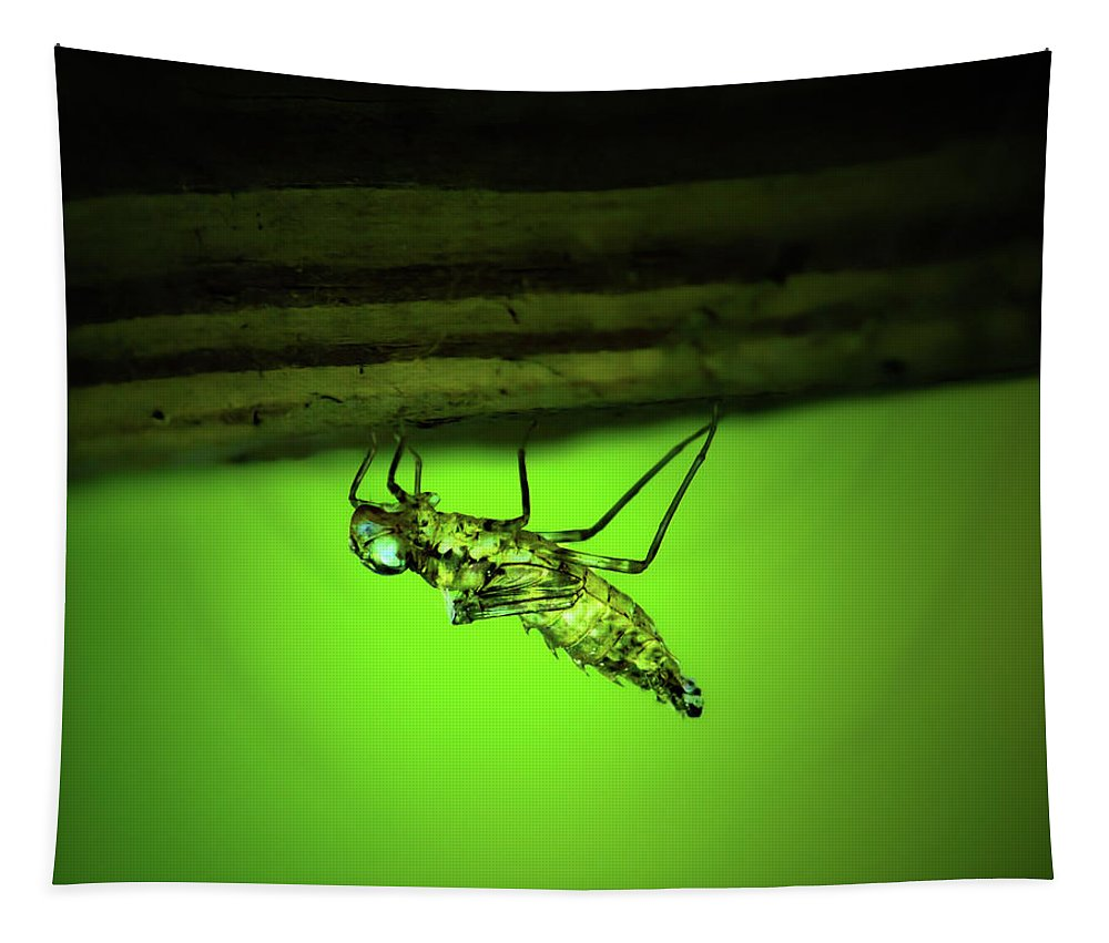 Dragonfly Tapestry featuring the photograph Dragonfly Nymph by Mark Andrew Thomas