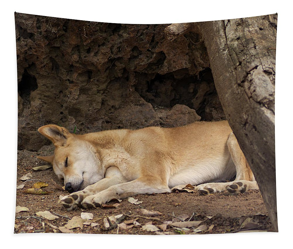Dingo Tapestry featuring the photograph Dream Time by Tania Read