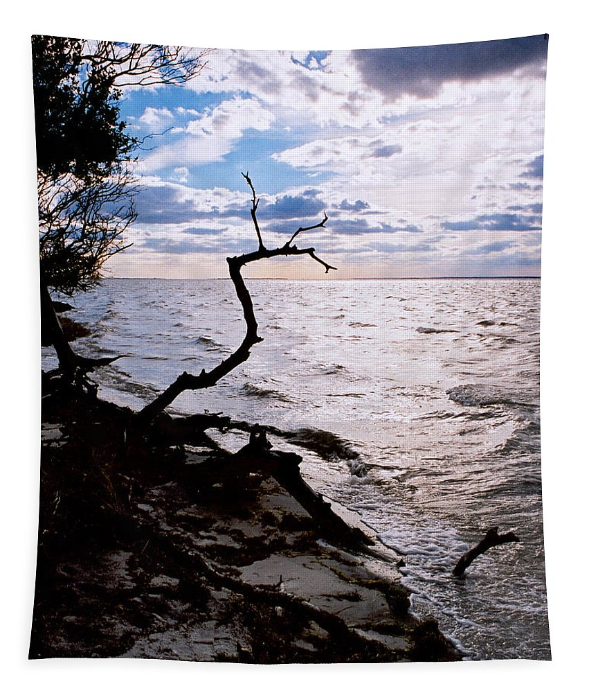 Barnegat Tapestry featuring the photograph Driftwood Dragon-Barnegat Bay by Steve Karol