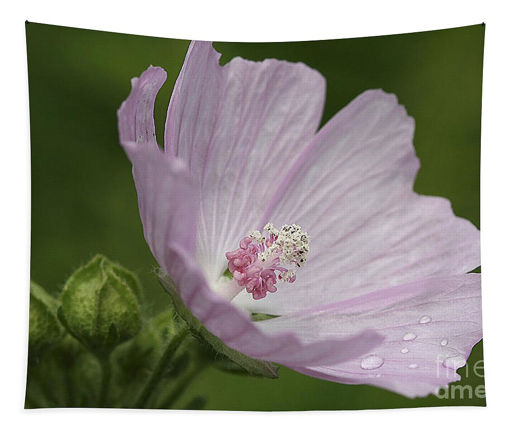 Flower Tapestry featuring the photograph Drops Of Dew by Deborah Benoit