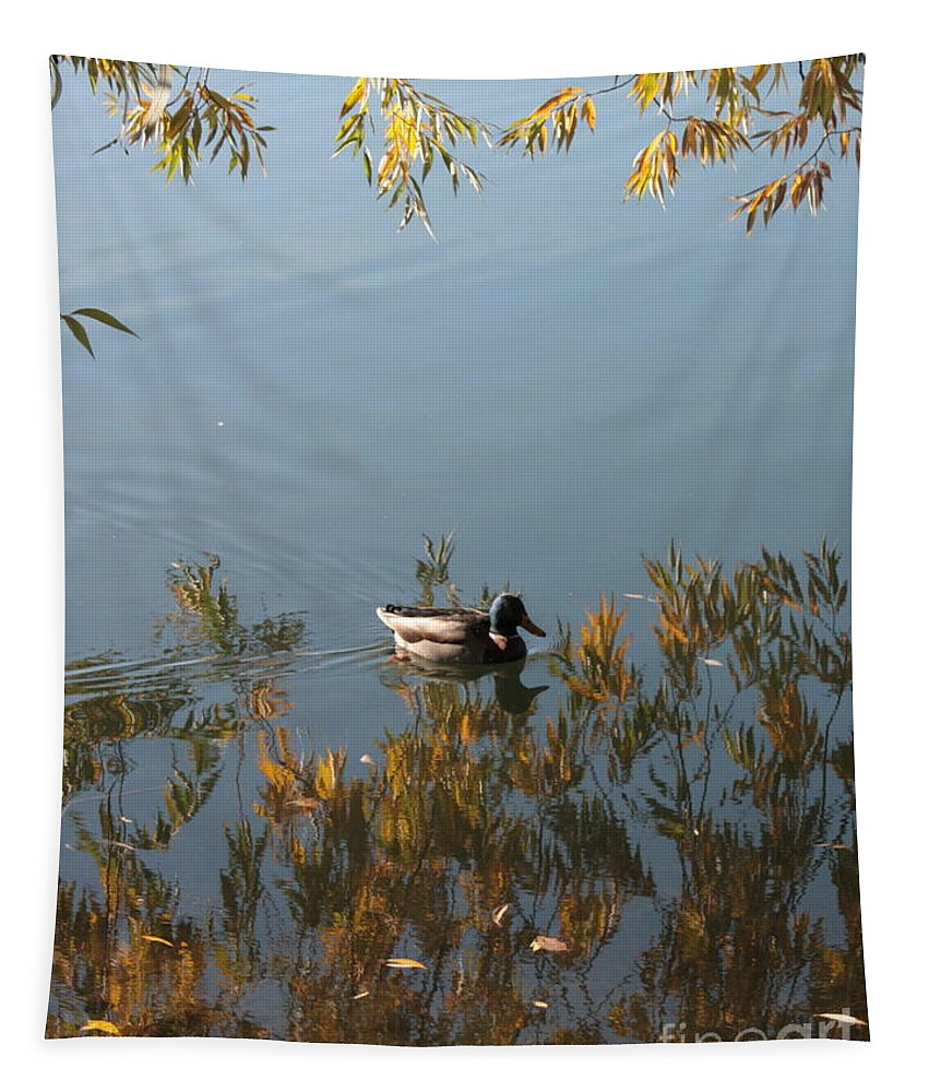 Autumn Tapestry featuring the photograph Duck On Golden Pond by Carol Groenen