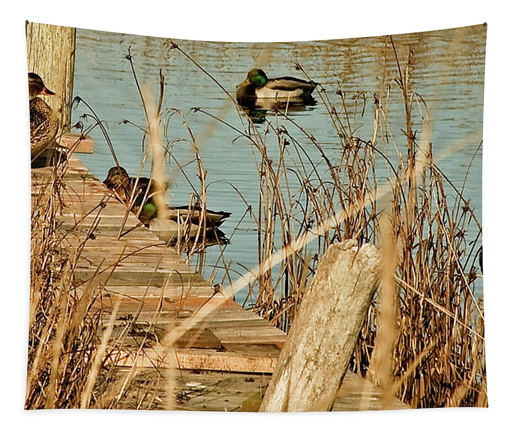 Wildlife Tapestry featuring the photograph Ducks On A Pond by Hugh Carino