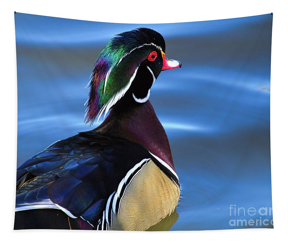 Wood Duck Tapestry featuring the photograph Ducktail Soup by Jim Garrison