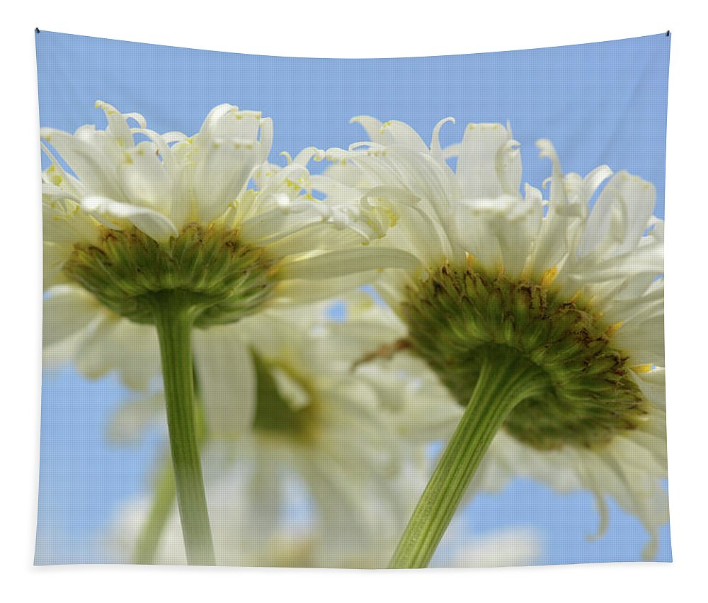 Daisy Tapestry featuring the photograph Duo Daisy by Barbara Treaster