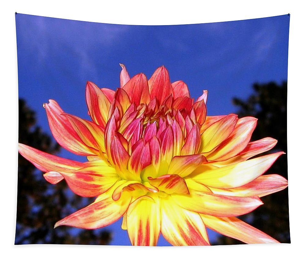 Dahlia Tapestry featuring the photograph Dusk And A Dahlia by Will Borden