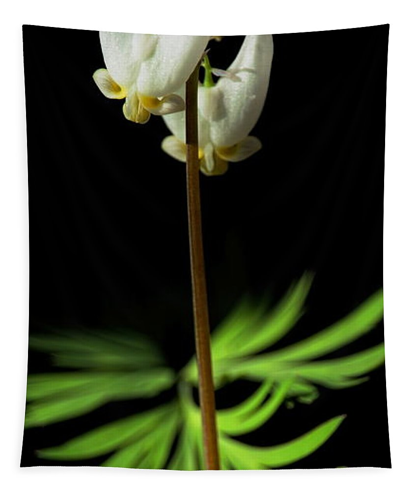 Dale Kauzlaric Tapestry featuring the photograph Dutchman's Breeches Narrow Format by Dale Kauzlaric