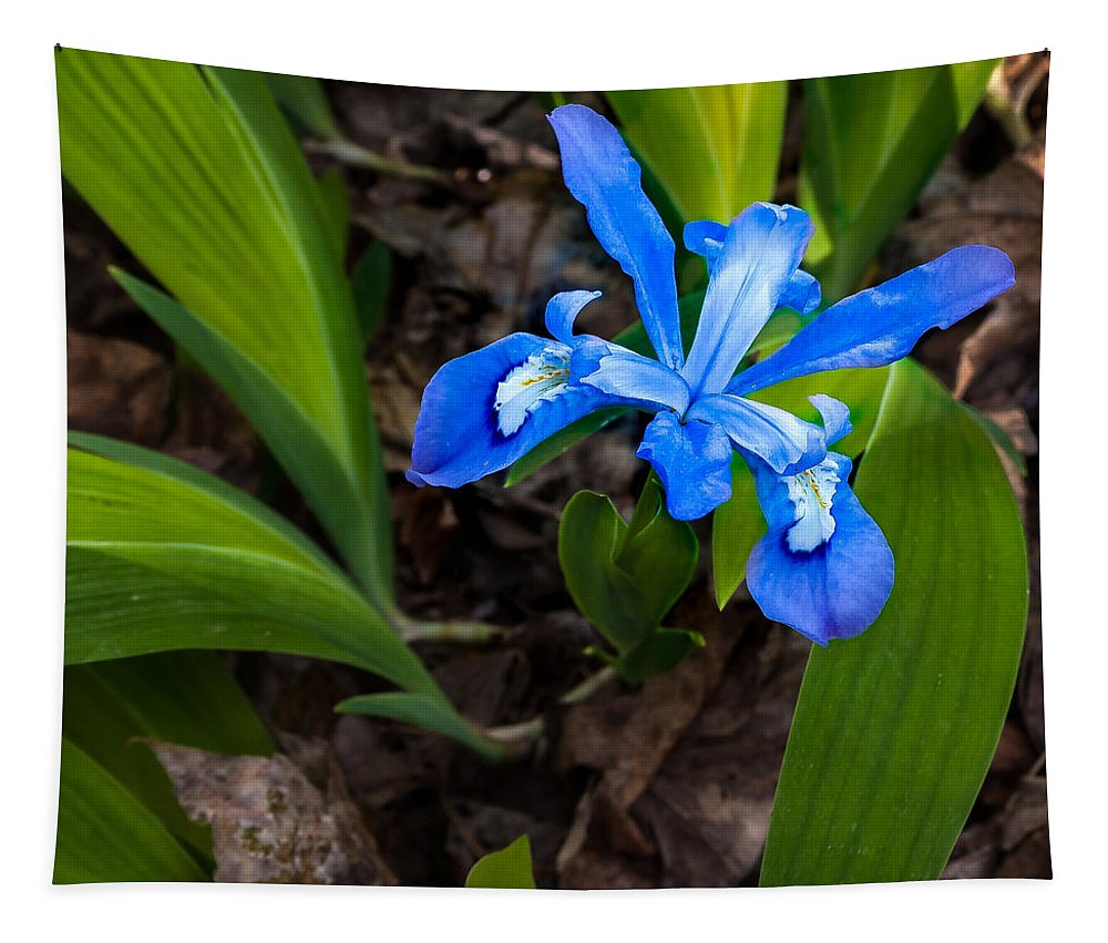 Great Smoky Mountains National Park Tapestry featuring the photograph Dwarf Iris by Jay Stockhaus