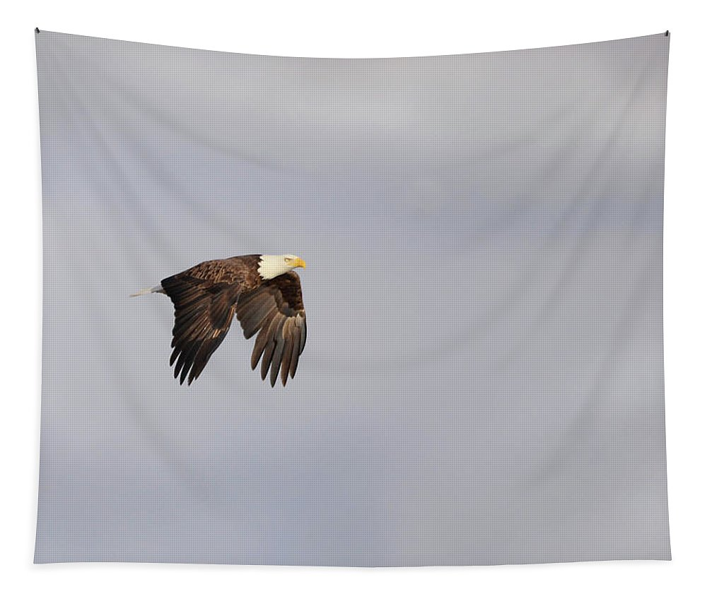 Bird Of Prey Tapestry featuring the photograph Eagle In Flight by Barbara Treaster