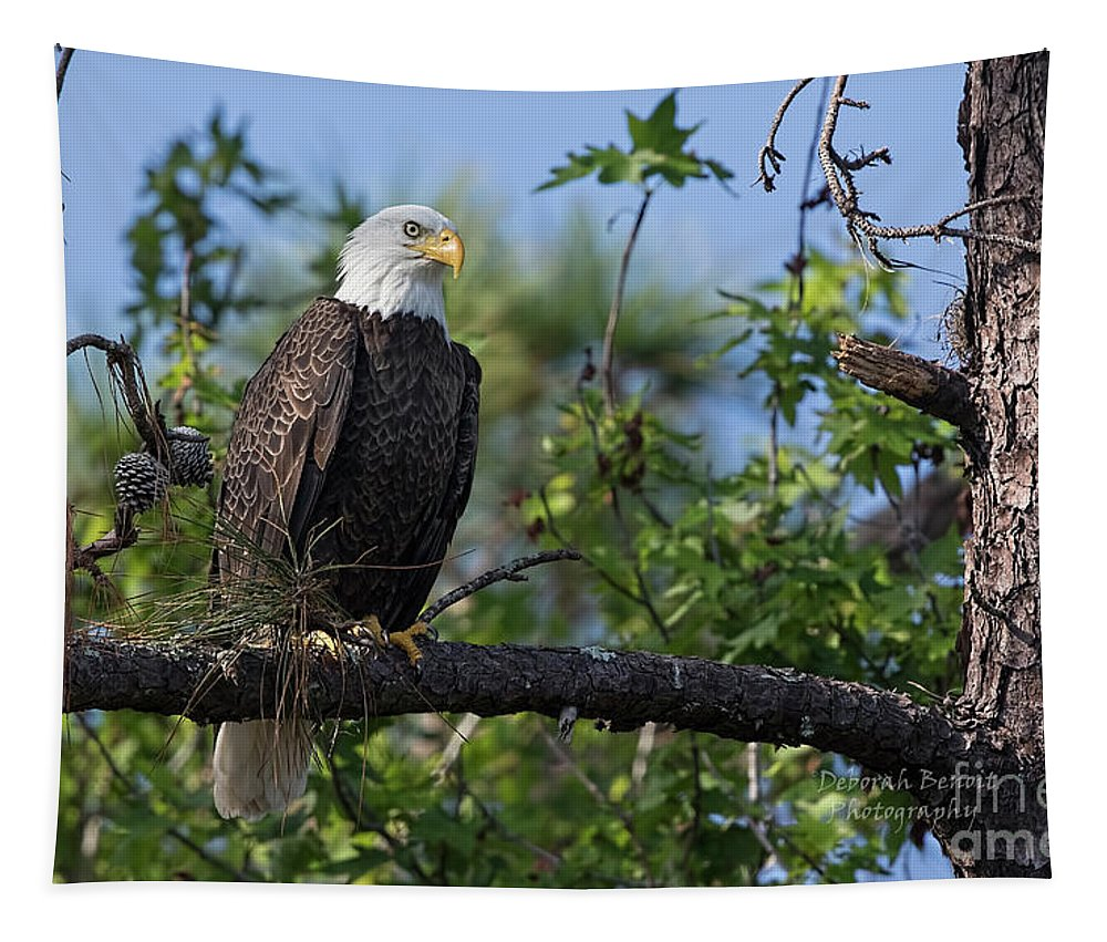 Eagle Tapestry featuring the photograph Eagle Series 13 by Deborah Benoit
