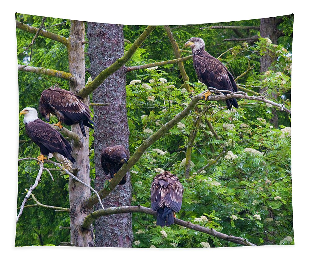 Tree Tapestry featuring the photograph Eagle Tree by Mike Dawson