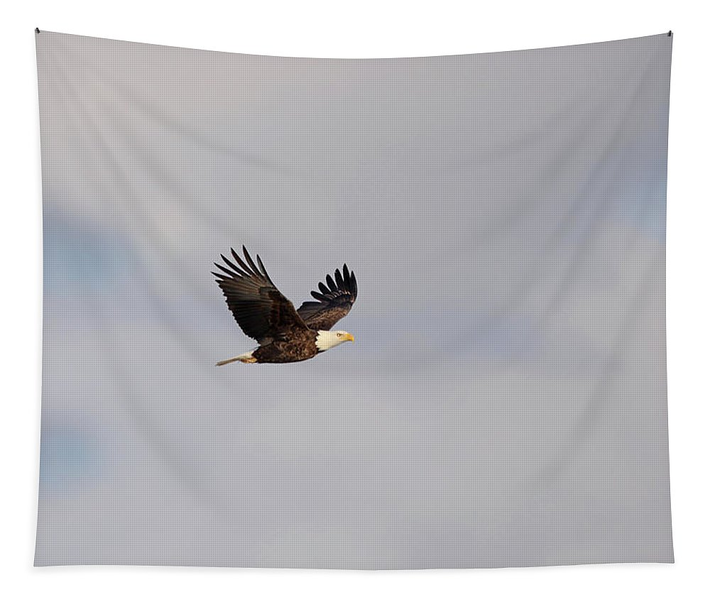 Bird Of Prey Tapestry featuring the photograph Eagle Wings Up by Barbara Treaster