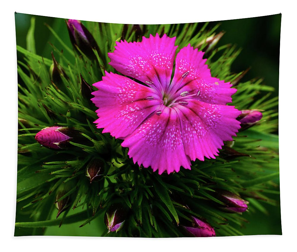 Flower Tapestry featuring the photograph Early Bloomer by Gales Of November