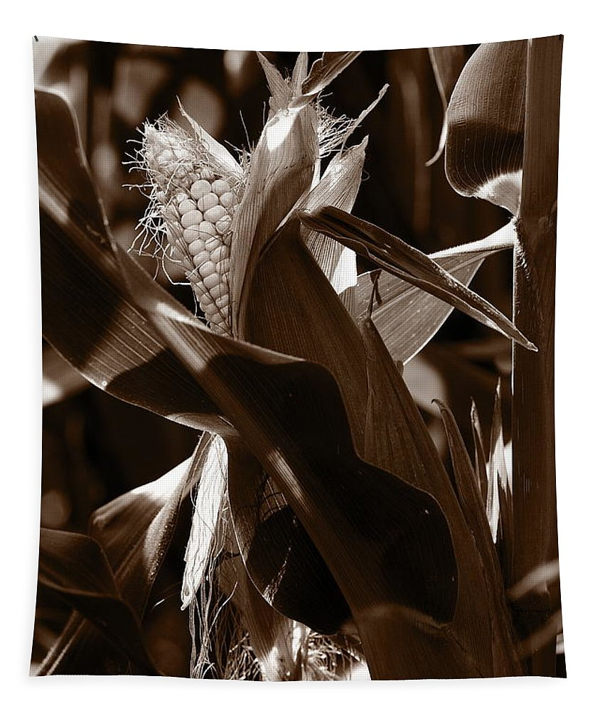 Farm Tapestry featuring the photograph Ears To You Corn - Sepia by Angela Rath