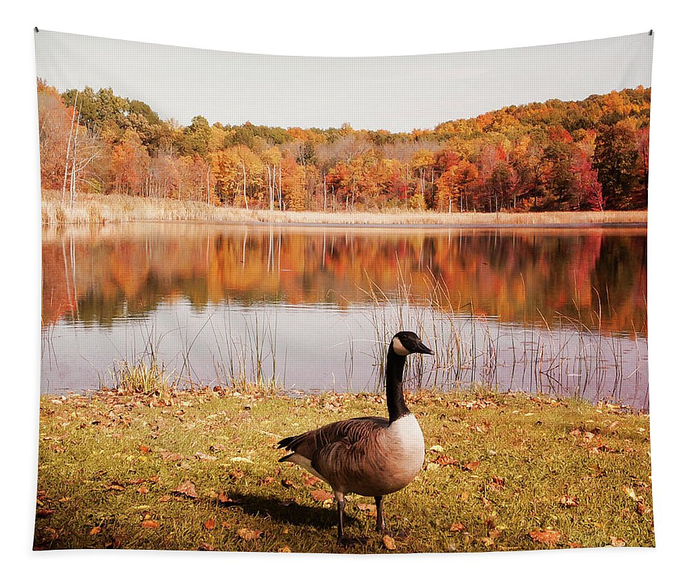 Autumn Tapestry featuring the photograph Earth Tone Autumn Pond Goose by Aimee L Maher ALM GALLERY