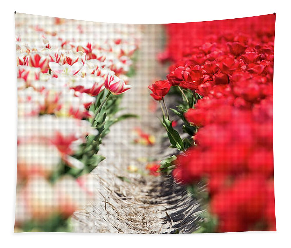 Netherlands Tapestry featuring the photograph East And West A Dutch Tulip Story by Alex Hiemstra