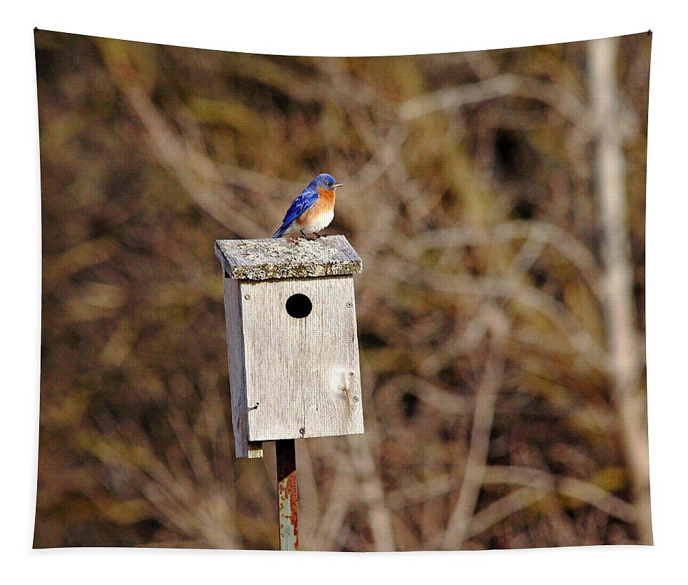 Eastern Bluebird Tapestry featuring the photograph Eastern Bluebird by Debbie Oppermann